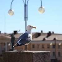 「かもめ食堂」のロケ地フィンランドをご案内。映画に入り込んだ気分で、まるごと堪能してみませんか♪