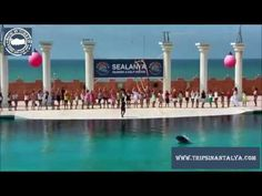 alanya Dolphin Show (www.tripsinantalya.com)