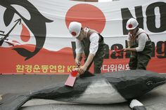 Japan Finally Comes Clean—They Don't Kill Whales for 'Science', Since 1986, Japan has masqueraded its whaling efforts as a scientific endeavor—but no more. 3/13