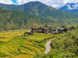 Rýžová políčka v Punakhce (Bhútán, Dreamstime)