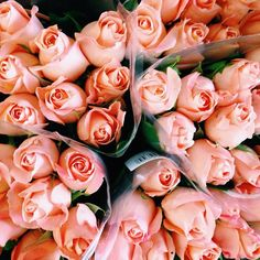 pretty and pink #flowers