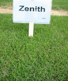 Zenith Zoysia Grass -- does better in lower zones, will only be green in Phx 6 months or LESS.  Does tolerate pets and shade.  For pets, lime to 6-7 for best results.