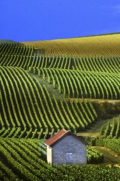 Champagne, France......Vineyards Where Only True Champagne Comes From........