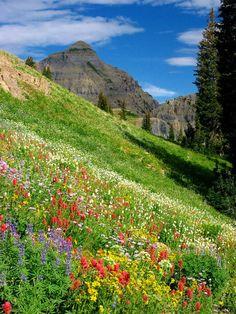 Rainbow Mountainside - Mt. Timpanogos, Utah