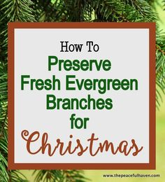No more pine needled everywhere!! Learn how to preserve fresh Evergreen Branches for Christmas.