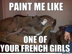 pitbull memes | French Pitbull by 5-ojesus - Meme Center