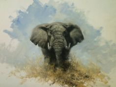 Elephant Sketch copyright David Shepherd