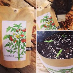 Itching for a little spring? Mini Tomato gardeninabag is an easy + fun project (grown inside) with sprouts in a week! #pottingshedcreations #spring #tomato #garden #gardener #summer #gardeninabag #idaho