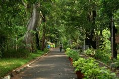 #Pondicherry #Botanical_Garden : The Botanical Garden is located south of the New Bus Stand. The gate leading to the garden is reminiscent of French architecture and it stands out from its immediate surroundings because it is in the middle of the old Tamil town.