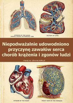 zdrowie.hotto.pl-udowodniono-przyczyne-zawalow-serca-chorob-krazenia-smierci-ludzi
