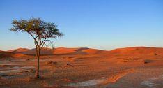 The last Tree - Namib Wüste - Namibia (Forum für Naturfotografen)