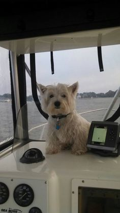 Welcome aboard-this is your captain speaking