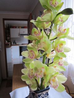 growing orchids in my garden last year