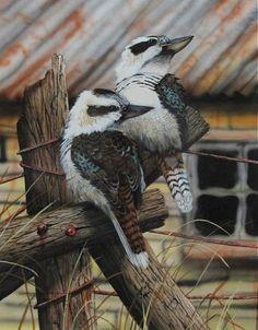 Australian Painting, Australian Birds, Australian Wildflowers, Bird Pictures, Animal Pictures, Bird People, Scratchboard Art, Australia Animals, Owl Family