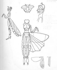 Praying Mantis Body Parts | details of some parts details of the soft parts with