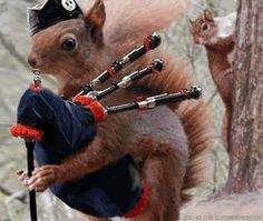 haha. he's gonna need a lot of airrrrrrr !!!!!!   ..... Bagpipes