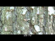 Sinergi Evolusi Adaptasi Morfologi dan Perilaku http://www.kesimpulan.com/2012/08/sinergi-evolusi-adaptasi-morfologi-dan.html