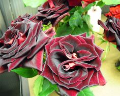Rosa, 'Black Magic' at Harvest, NYC flower market #Grove Design