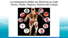 Physiology B Online Course 1 Endocrine System, Respiratory System, Nervous System Parts, Renal Physiology, Anterior Pituitary, Health Information Management, Human Nutrition, Autonomic Nervous System