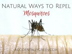 Natural Ways to Repel Mosquitoes