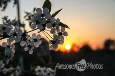 88-awesomefreephotos-nature-sunset-cherry-blossom-750