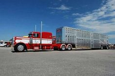 Custom Semi Cattle Trucks | , Cattle Trucks, Bull Hauler, Trucks Rig, Peterbilt Cows, Cows Trucks ...
