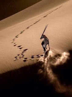 Gemsbok on Dune Wildlife Photography, Animal Photography, Beautiful Creatures, Animals Beautiful, Deserts Of The World, Photo Animaliere, Tier Fotos, African Animals, Nature Animals