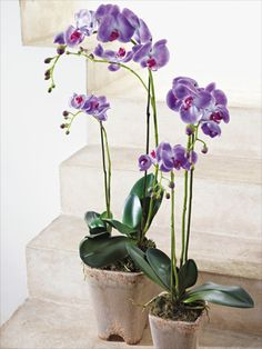 perfect for the home Indoor Orchids, Phalaenopsis Orchid, Interior Exterior, Ikebana, Horticulture, Floral Arrangements, Blond, Architecture Design, Glass Vase
