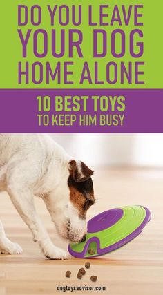 Dogs get bored when they're alone. They need toys and activities to keep them entertained while you're at work. Here's our Top 10 best toys keep your dog busy when he's home alone. toys How to Keep Your Dog Busy When Home Alone Cute Dog Toys, Diy Dog Toys, Best Dog Toys, Cool Toys, Best Dogs, Toys For Bored Dogs, Dog Pitbull, Dog Boredom, Dog Enrichment