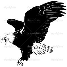 Белоголовый орлан — стоковая иллюстрация #3263923