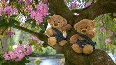 Teddy Bear Images, Teddy Bear Pictures, Good Morning Gif, Love Bear, Animation, Cute Bears, Cute Quotes, Animals, Teddy Bears