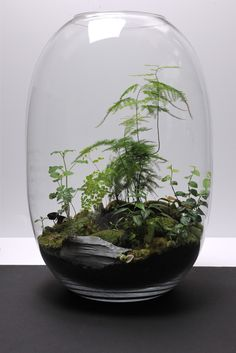 from grow little, terrarium atelier in paris. i love the pine tree-esque fern in it