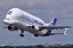 Airbus A300-600 Beluga 2 F-GSTB Supertransporter - Airbus Transport International powerful take-off !