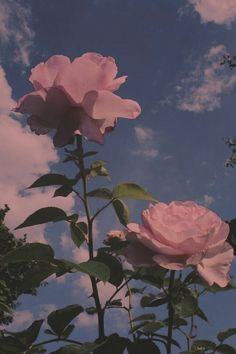 Pin by cici on iphone wallpaper in 2019 Flor Iphone Wallpaper, Iphone Wallpaper Tumblr Aesthetic, Rose Wallpaper, Aesthetic Pastel Wallpaper, Cute Wallpaper Backgrounds, Aesthetic Backgrounds, Nature Wallpaper, Aesthetic Wallpapers, Pink Clouds Wallpaper