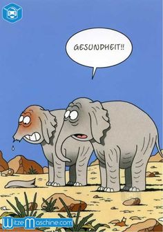 Gute Besserung - Elefant niest sich den Rüssel weg
