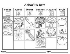 Parts of a Plant We Eat- Sort  (with labeled images)