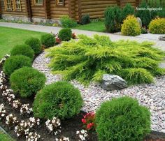 Ideas For House Front Landscaping Small Garden Landscape Design, Small Garden Design, Landscaping Plants, Front Yard Landscaping, Landscaping Design, Garden Yard Ideas, Garden Planning, Garden Inspiration, Beautiful Gardens