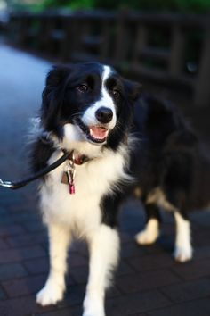Border Collie. Look at that SWEET face :)