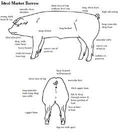 Learning to judge 4-H Livestock Judging Programs: How to Judge Swine