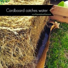 How to Condition Straw Bales Use cardboard to catch water when conditioning straw bales Garden Shrubs, Garden Planters, Garden Beds, Lawn And Garden, Garden Farm, Hay Bale Gardening, Strawbale Gardening, Desert Gardening, Urban Gardening