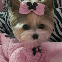 Cute Small Dogs, Cute Baby Dogs, Cute Baby Animals, Animals And Pets, Cute Puppies, Dogs And Puppies, Yorkshire Terrier, Dog Emoji, Teacup Yorkie