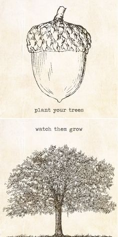 Plant your trees. Watch them grow.