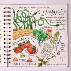 Page 2 of 4 from my illustrated allotment journal. To see the rest visit my blog…