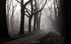 Photo Misty Morning Avenue in park St. Annapark by William Mevissen. Landscape and Nature Photography at www.williammevissen.nl.