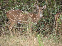 Tansa Wildlife Sanctuary - in Maharashtra, India