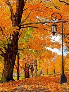 Autumn Stroll by mjmalone54, via Flickr