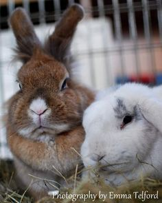 Snowdrop and Clover have now been spayed and will soon be available for adoption together they make a very squeee couple of buns =) #rabbits #yorkshire #animalsofinstagram #animalshelter #charity #Leeds