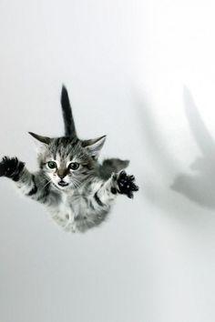 roar | falling | jump | kitty cat | cute | black & white | rebel | flying | fall | leap | cat | 9 lives | funny | www.republicofyou.com.au