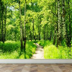 Wall Mural Birch Forest in Summer Peel and Stick by RoyalWallSkins