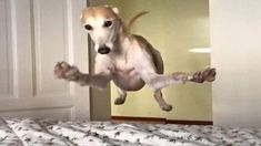 Best Greyhound Dog Names Funny Animal Pictures, Cute Funny Animals, Dog Pictures, Funny Dogs, Cute Cats And Dogs, I Love Dogs, Animals And Pets, Dogs And Puppies, Doggies
